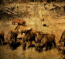 Wildebeest - Mkuze Game Reserve, South Africa by Sharon Bishop