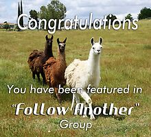 Follow Another Feature Banner by Doty