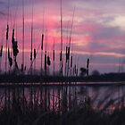 Cattails In The Sunrise by J. L. Gould