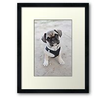 Cute puppy looking up Framed Print