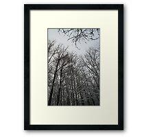 Winter trees in Austria Framed Print