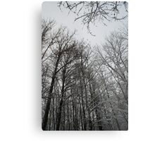 Winter trees in Austria Metal Print