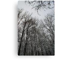 Winter trees in Austria Canvas Print