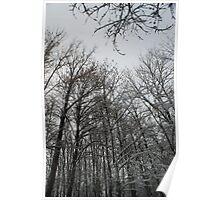 Winter trees in Austria Poster