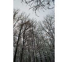 Winter trees in Austria Photographic Print