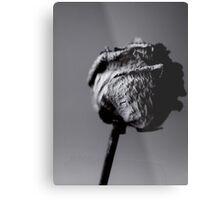 dried rose Metal Print