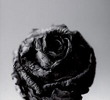 dried rose front  by Davis Gawen