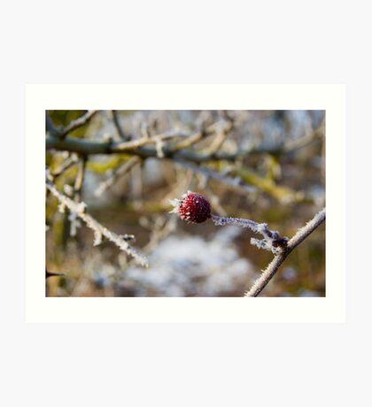 Frost Berries Art Print
