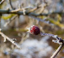 Frost Berries by Dimbledar