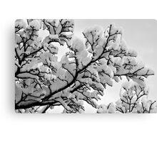Winter's Skeletons - Marshmallow Trees Canvas Print
