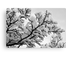 Winter's Skeletons - Marshmallow Trees Canvas Print