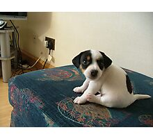 Puppy  Jerry lee Photographic Print