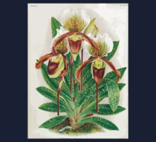 Iconagraphy of Orchids Iconographie des Orchidées Jean Jules Linden V17 1906 0206 Kids Tee