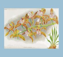 Iconagraphy of Orchids Iconographie des Orchidées Jean Jules Linden V17 1906 0055 Baby Tee