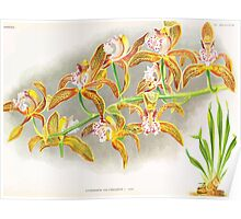 Iconagraphy of Orchids Iconographie des Orchidées Jean Jules Linden V17 1906 0055 Poster