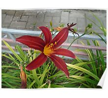 Live nature,red flower Poster