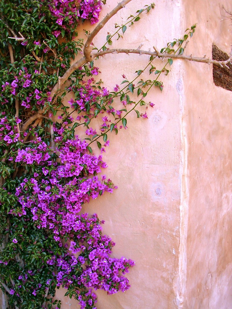 Climbing up the walls... by Kimberly Morales