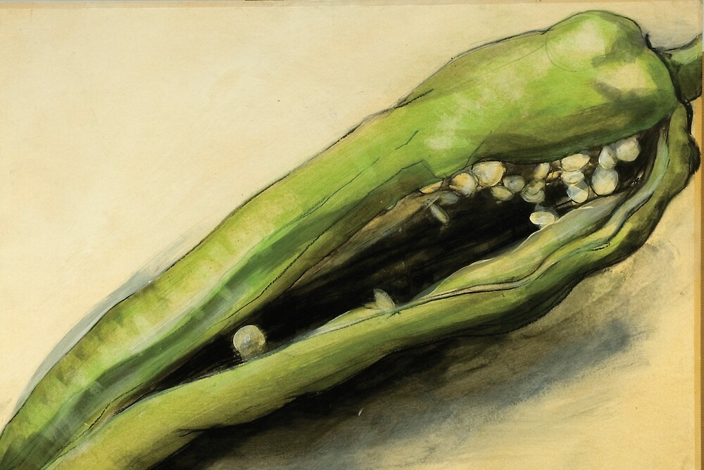 Green pepper  by Doug Selway