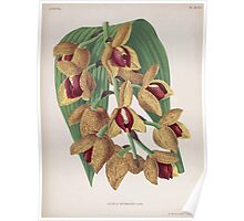 Iconagraphy of Orchids Iconographie des Orchidées Jean Jules Linden V15 1899 0118 Poster
