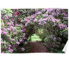 ~ The Rhododendron Path ~ Poster