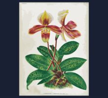 Iconagraphy of Orchids Iconographie des Orchidées Jean Jules Linden V17 1906 0214 Kids Tee