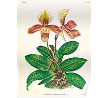 Iconagraphy of Orchids Iconographie des Orchidées Jean Jules Linden V17 1906 0214 Poster