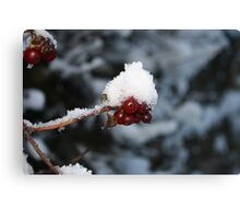 Red Berry - White Snow Cap Canvas Print