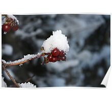 Red Berry - White Snow Cap Poster