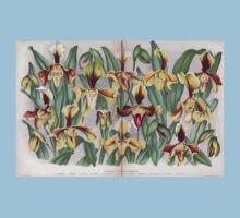Iconagraphy of Orchids Iconographie des Orchidées Jean Jules Linden V14 1898 0161 Kids Tee