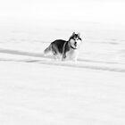 Walking between the lines by Jan Szymczuk