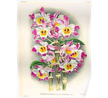Iconagraphy of Orchids Iconographie des Orchidées Jean Jules Linden V17 1906 0028 Poster