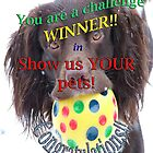 George - Winner's Banner for Show us YOUR pets! by Sheila Laurens