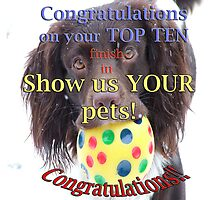 George - Top Ten Banner for Show us YOUR pets! by Sheila Laurens