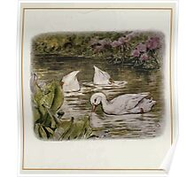 Jemima Puddle Duck Beatrix Potter 1917 0007 Search for Food Splish Splash Sploosh in the Pond Poster