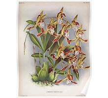 Iconagraphy of Orchids Iconographie des Orchidées Jean Jules Linden V16 1900 0194 Poster