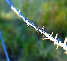 Barb wire - great for test focusing your macro by Mark Batten-O'Donohoe