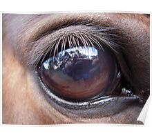 Horses Eye captures photographer Poster