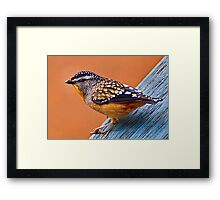 Spotted Pardalote (Pardalotus punctatus) - Thanks to Rick for the ID Framed Print