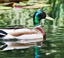Just Swimming Around by Susie Peek