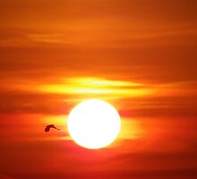 Bright Sunrise by MistyAdkins