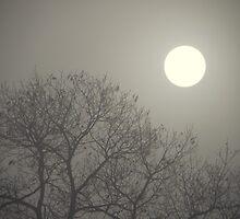Foggy Sunrise by MistyAdkins