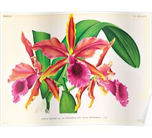 Iconagraphy of Orchids Iconographie des Orchidées Jean Jules Linden V17 1906 0094 Poster