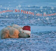 No peeking until Christmas! by Owed To Nature