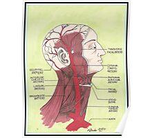 Arteries Poster