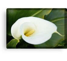 And lilies white... Canvas Print