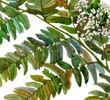 Watercolor fern and flowers Sticker