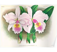 Iconagraphy of Orchids Iconographie des Orchidées Jean Jules Linden V17 1906 0044 Poster