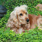 Gemini, Enjoying the Garden by aussiebushstick