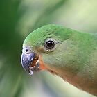 Young Female King Parrot by aussiebushstick