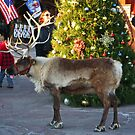 Grandma Got Run Over By THIS Reindeer by Chet  King
